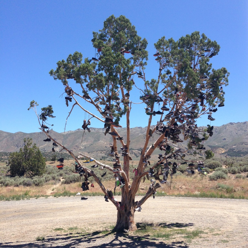 Shoe tree - Hallelujah Junction, CA